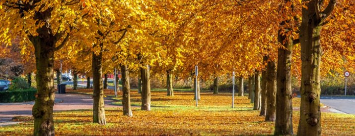 10 reasons why autumn in london is the best 26 30 railcard