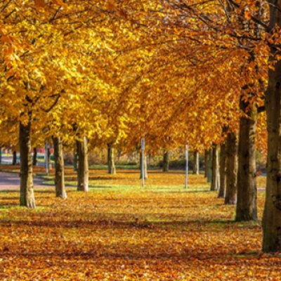 10 reasons why autumn in London is the best image
