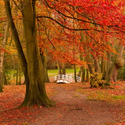 Great locations to catch the autumn leaves image